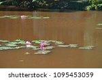 aquatic plants are plants that... | Shutterstock . vector #1095453059