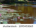 aquatic plants are plants that... | Shutterstock . vector #1095453065