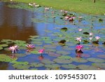 aquatic plants are plants that... | Shutterstock . vector #1095453071