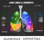 human lungs infographic with... | Shutterstock .eps vector #1095457061