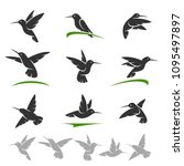 colibri set. vector | Shutterstock .eps vector #1095497897