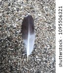 Small photo of feather of drove on the floor