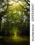 Small photo of Little Amazon Thailand, Sang Nae Canal, Phang Nga, Thailand.
