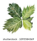 Small photo of The tropical green leaves isolated in white background, with clipping path and dicut easily to use as a natural object.