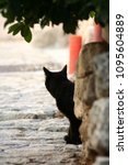 Stock photo silhouette of a cat 1095604889