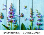 sage herbal plant parts on...   Shutterstock . vector #1095626984