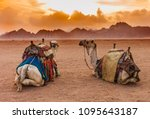 two camels are in the sinai... | Shutterstock . vector #1095643187