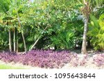 a garden in a tropical country. | Shutterstock . vector #1095643844