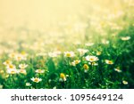 beautiful floral background... | Shutterstock . vector #1095649124