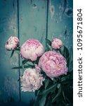 beautiful peonies in a vase ... | Shutterstock . vector #1095671804