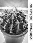trendy cactus on the window... | Shutterstock . vector #1095681407