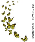 beautiful yellow monarch... | Shutterstock . vector #1095817151