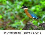 beautiful colorful bird  blue... | Shutterstock . vector #1095817241