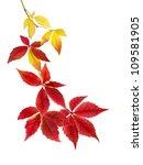 neat arrangement of beautifully ... | Shutterstock . vector #109581905