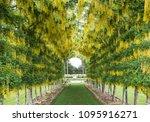 dunedin  otago new zealand...   Shutterstock . vector #1095916271