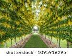 dunedin  otago new zealand...   Shutterstock . vector #1095916295