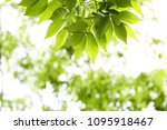 green tree leaf background  | Shutterstock . vector #1095918467