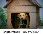 a stray dog sits on a chain in... | Shutterstock . vector #1095926864
