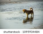 a curious dog playing on the... | Shutterstock . vector #1095934484