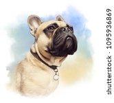 cute french bulldog. realistic...   Shutterstock . vector #1095936869