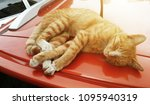 cat rest on car roof | Shutterstock . vector #1095940319