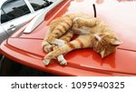 cat rest on car roof | Shutterstock . vector #1095940325