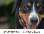 lose up portrait of a dog | Shutterstock . vector #1095991631