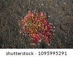 wet green flora on hawaii island   Shutterstock . vector #1095995291