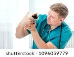 veterinarian examining guinea... | Shutterstock . vector #1096059779