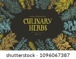 hand drawn culinary herbs and... | Shutterstock .eps vector #1096067387