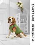 full length portrait of dressed ... | Shutterstock . vector #1096112981
