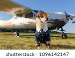 Stock photo funny photo of the shiba inu dog in a pilot suit at the airport 1096142147