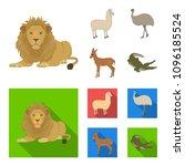 lama  ostrich emu  young... | Shutterstock .eps vector #1096185524