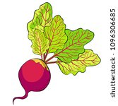 beet with a top green vegetable ... | Shutterstock .eps vector #1096306685