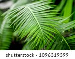exotic green plant leaves... | Shutterstock . vector #1096319399