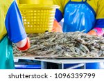 shrimps in production. from... | Shutterstock . vector #1096339799