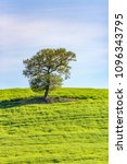 solitary tree in a field | Shutterstock . vector #1096343795
