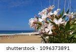 Beautiful White Flowers Of...