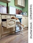 The dog in kitchen searches for something tasty. - stock photo