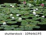 Water Lily Of Heian Jingu...