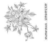 bougainvillea  flower isolated... | Shutterstock .eps vector #1096491539