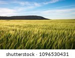 field of wheat in the morning.... | Shutterstock . vector #1096530431