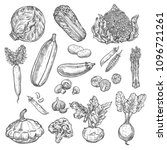 vegetables sketch icons of... | Shutterstock .eps vector #1096721261