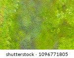 top view of a wet green grass | Shutterstock . vector #1096771805