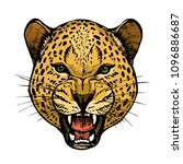 roaring leopard head with bared ... | Shutterstock .eps vector #1096886687