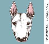 english bull terrier portrait....   Shutterstock .eps vector #1096887719