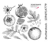 hand drawn whole pomegranate ... | Shutterstock .eps vector #1096914779