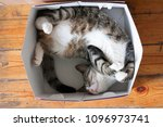 Stock photo striped cat sleeping in a cardboard box 1096973741
