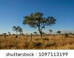 african savannah landscape | Shutterstock . vector #1097113199
