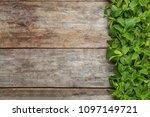 fresh aromatic mint on wooden... | Shutterstock . vector #1097149721